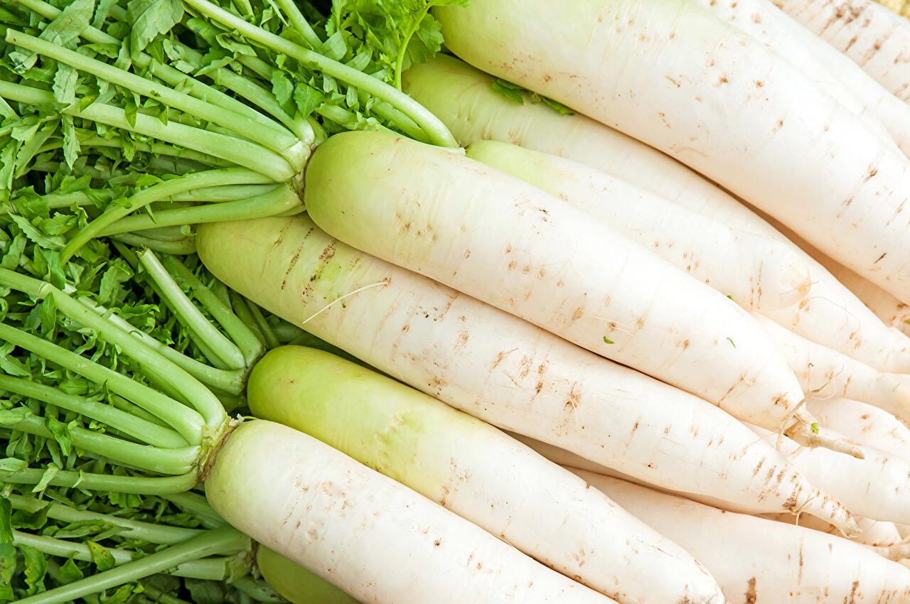 Редис белый - как выращивать, что выбрать и почему именно белый