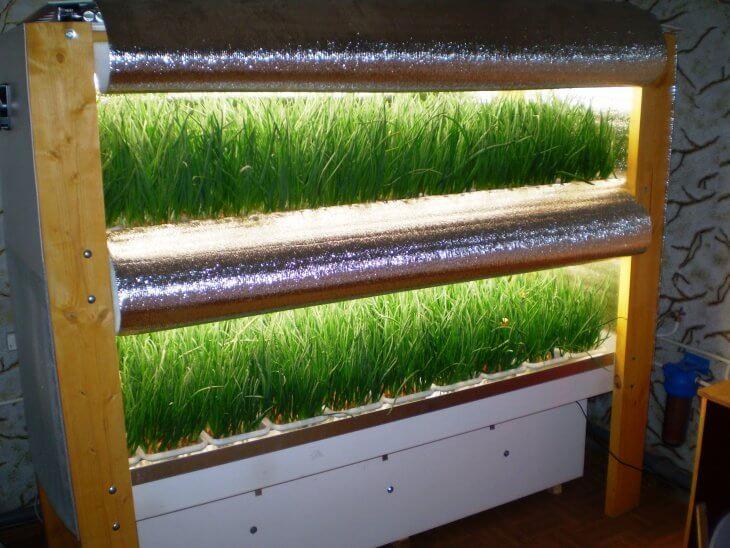 Выращивание лука в помещении