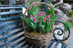 Результаты выращивания тюльпанов