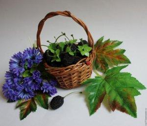 Сбор урожая шелковицы летом