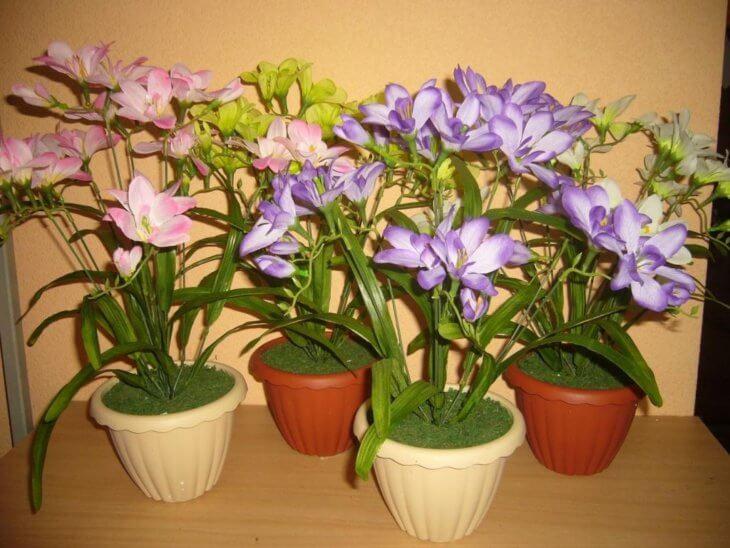 Фрезию возможно выращивать и в домашних условиях