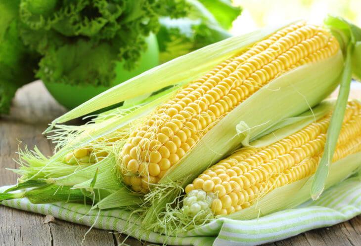Отличный урожай кукурузы