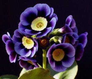 Одна из разновидностей цветения