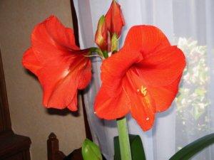 Так выглядит здоровое цветение