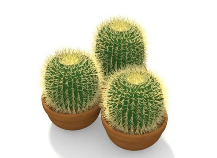 Мини кактусы для дома