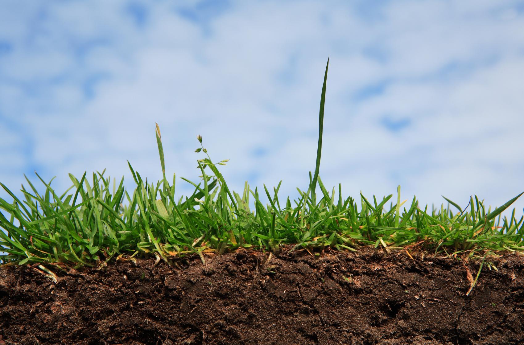 Кислотность почвы - это плохо или хорошо, способы проверки