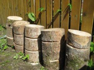 Заготовка дерева для выращивания грибов
