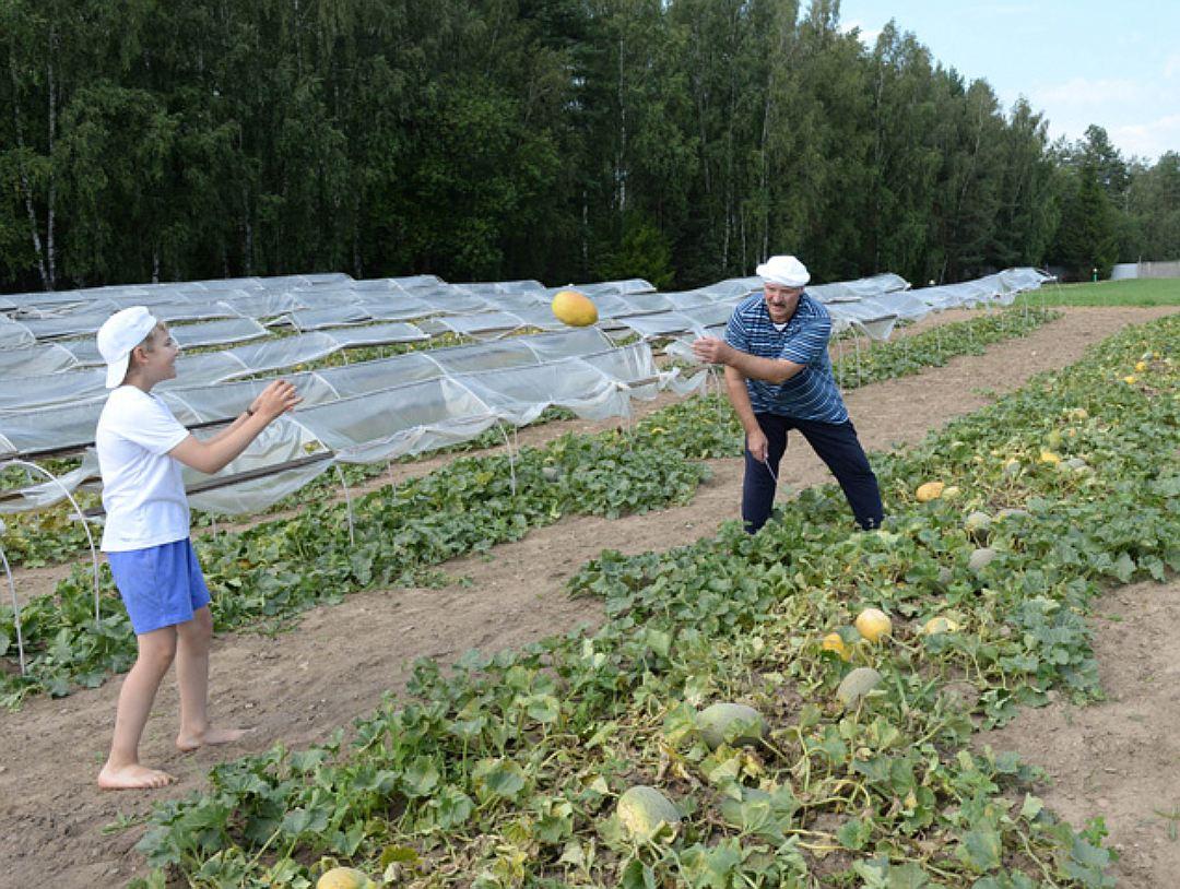 Высокопродуктивные сорта дынь для Подмосковья: способы выращивания
