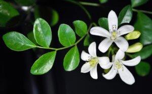 Прекрасные цветочки бергамота