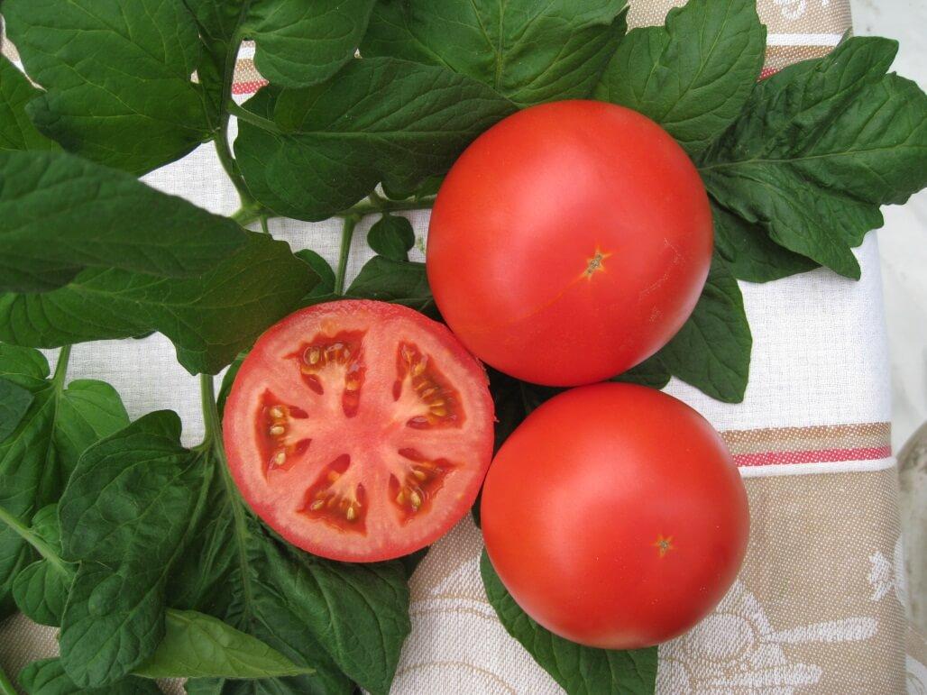 Как вырастить томат сорта Бонанза в открытом грунте: отзывы