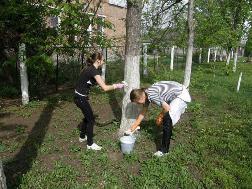 Когда и как нужно белить деревья - правила и рекомендации