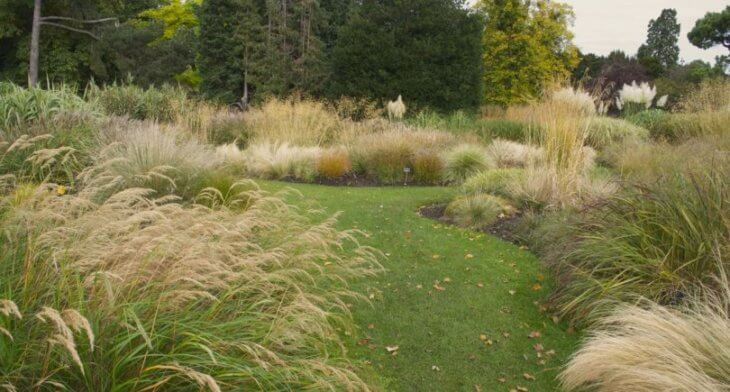 Травы, которые украсят территорию и не займут много времени в уходе