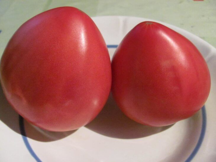 Отличный урожай томатов из Сибири