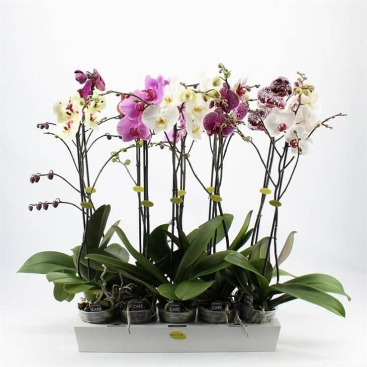 Выращивание орхидеи в горшочке