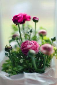 Выращивание цветочка на подоконнике