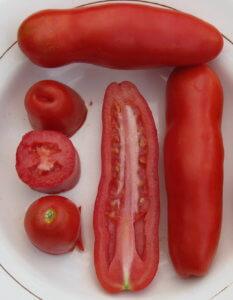Урожай томатов со своего огорода