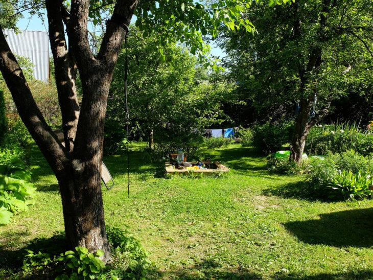 Посадка деревьев для развития кроны