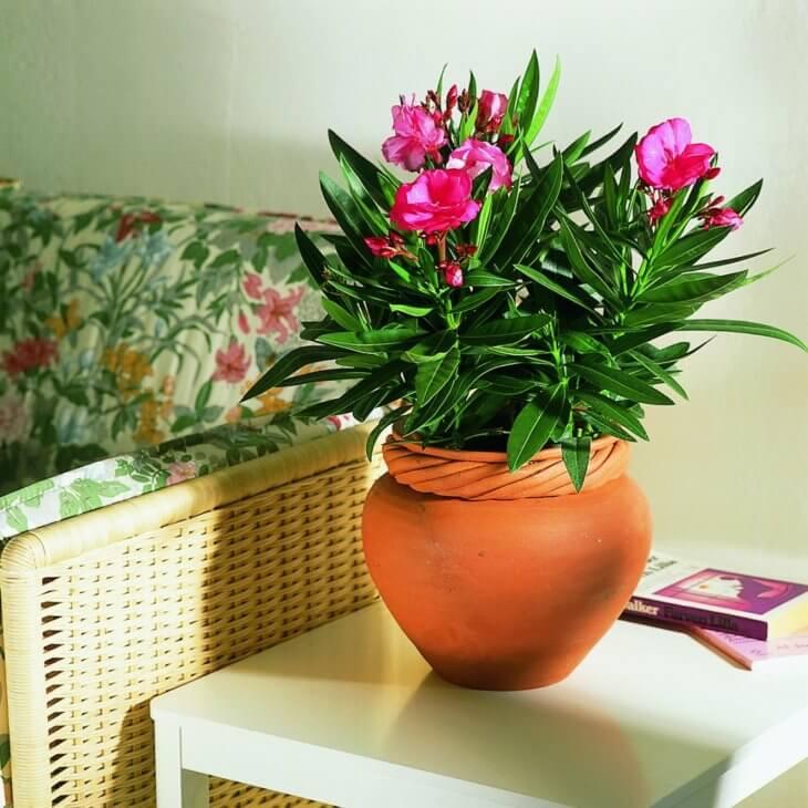 Цветущие растения в комнате