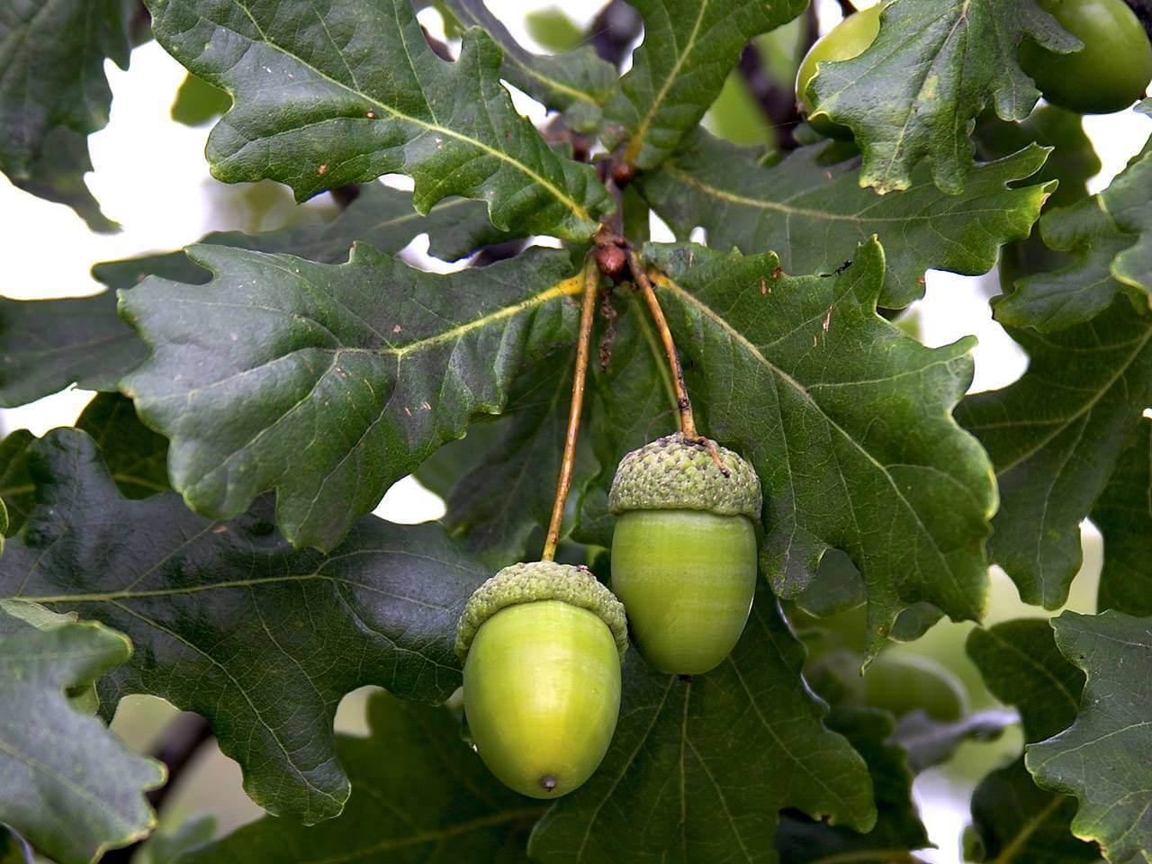 Лиственные деревья: названия и описание