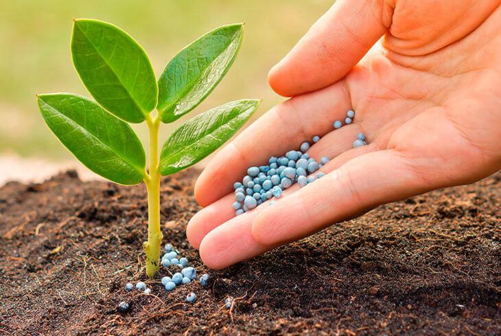 Внесение удобрения в саду