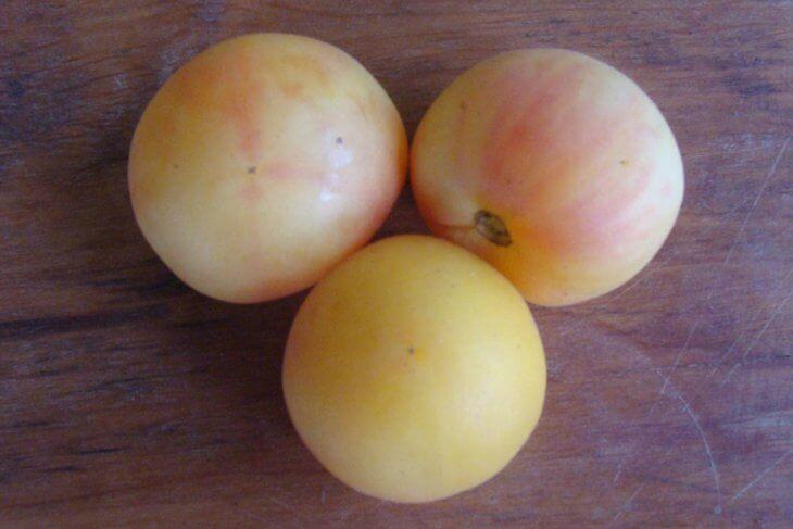Поспевание томатов