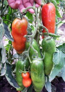 Поспевание урожая