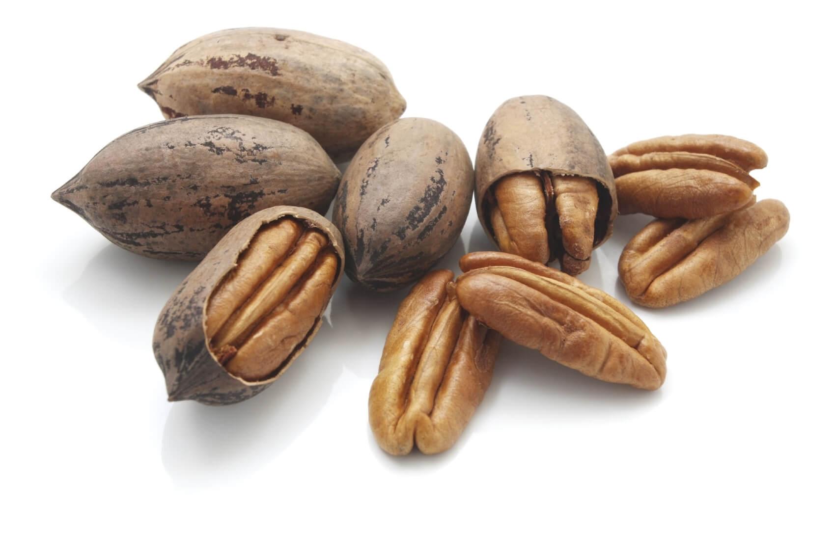 Описание пекана, который похож на грецкий орех, но вытянутой формы