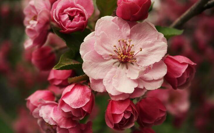 Прекрасное цветение после подкормки