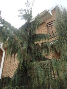 Украшение кипарисовиком дома