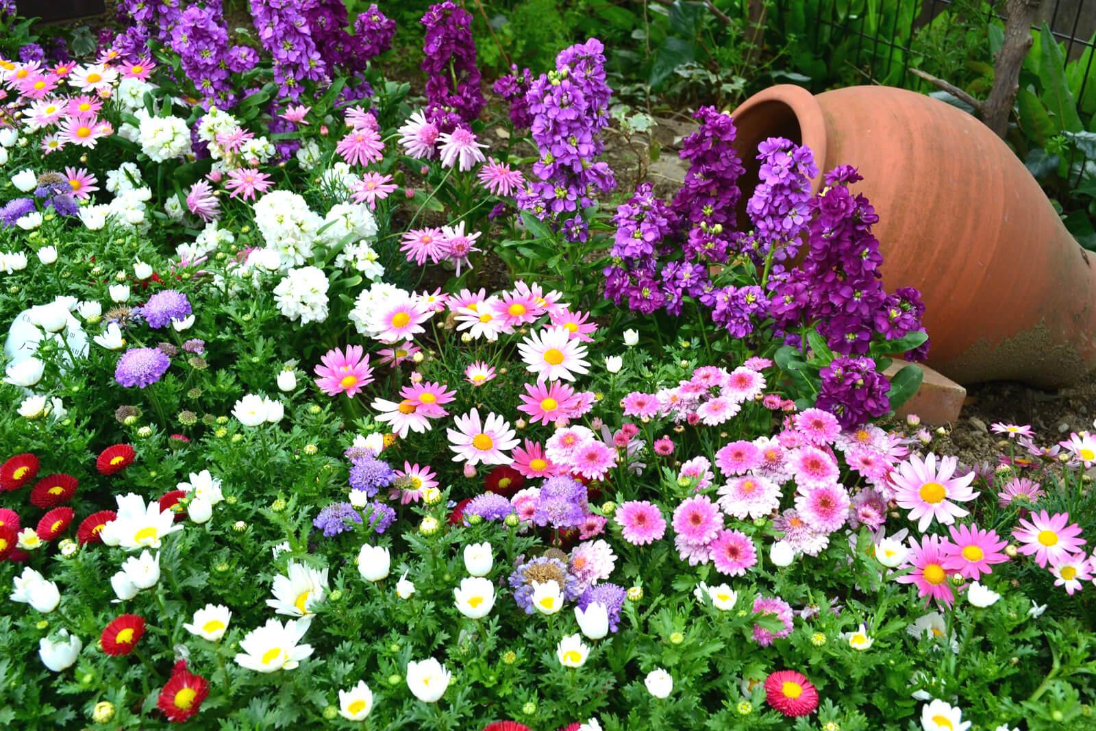 Модные цветы в горшках: каковы они и как выбрать для них горшок