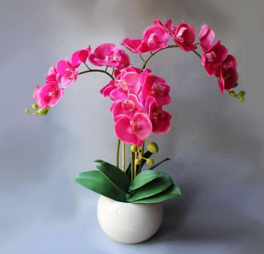 Цветы орхидеи картинки в горшке