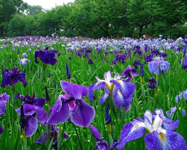 Какие красивые цветы для дачи лучше подойдут: многолетники или однолетники