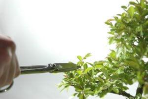 Прищипка растений с помощью специальных инструментов
