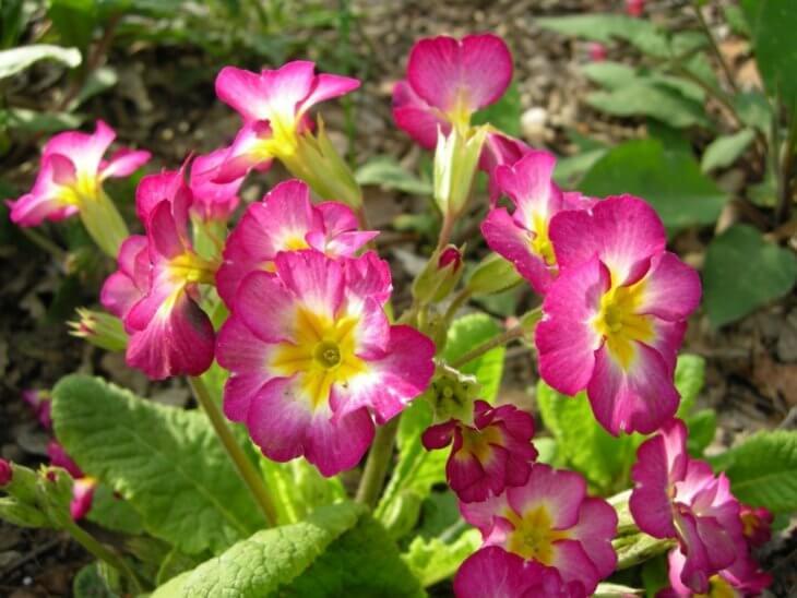 При хорошем освещении, цветение будет ярким