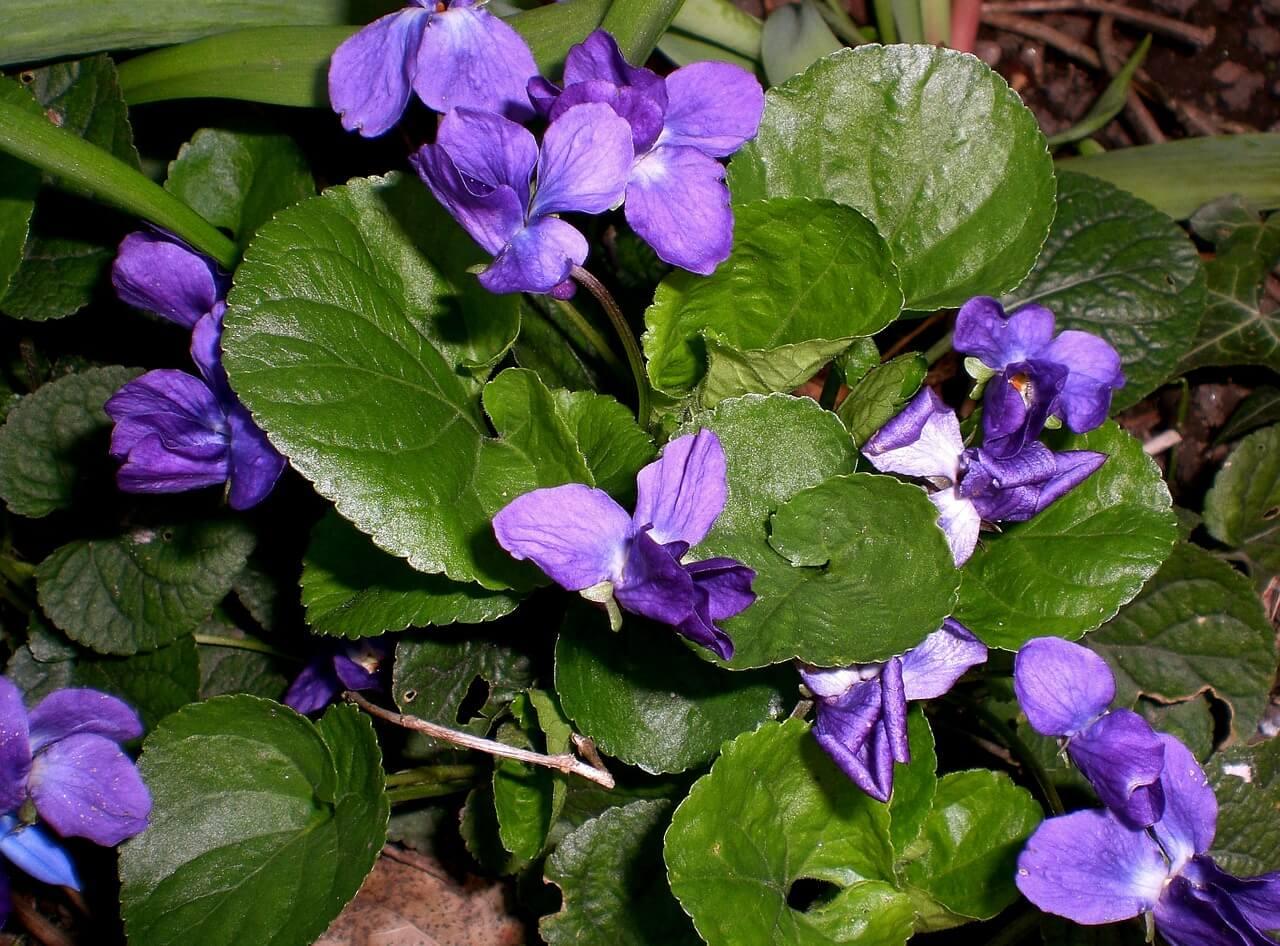 Многолетние цветы для дачи цветущие: что и как сажать