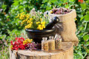 Лечебные растения помогут в любой момент