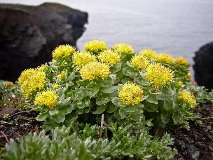 Правильно размноженное растение