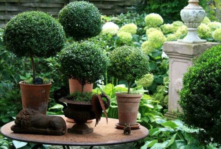 Горшочки для растения
