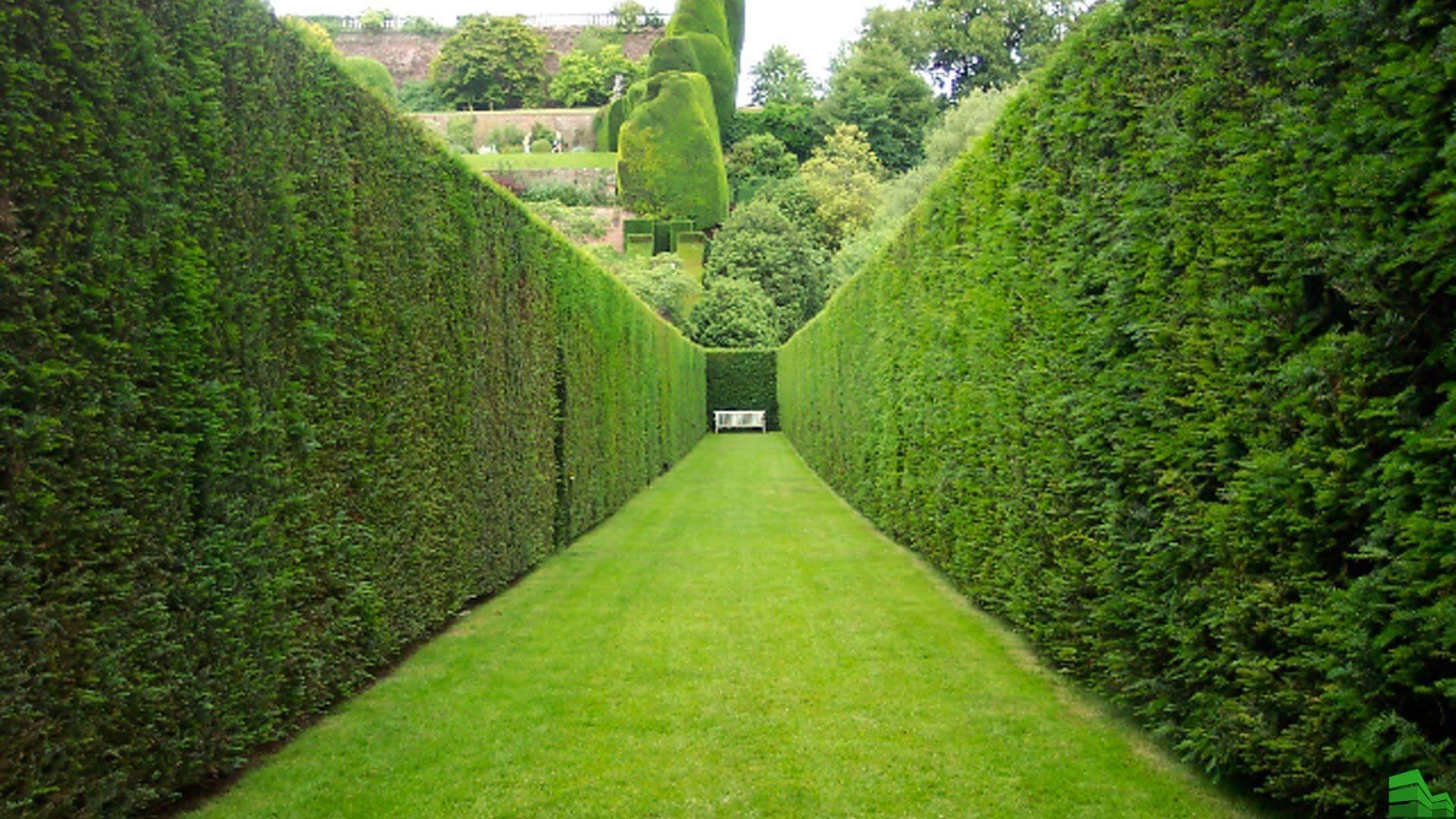 Забор из туй: основные характеристики