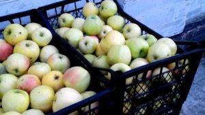 Хранение яблок в ящиках