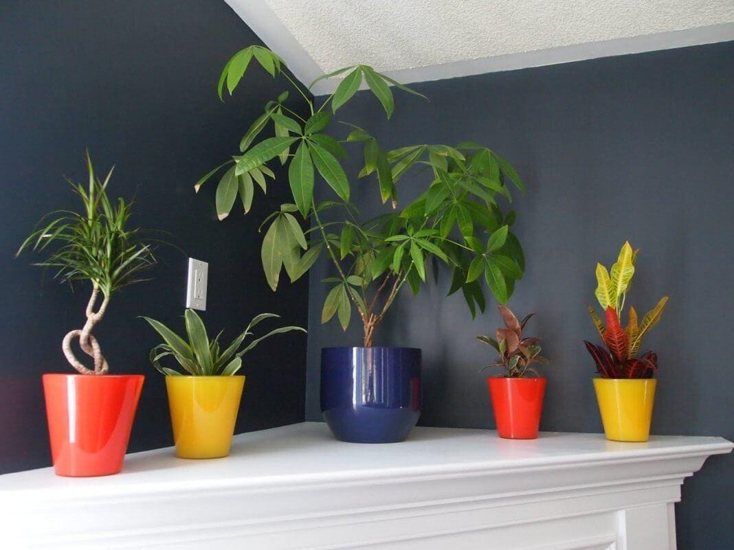Красота комнатных цветов, растущих в тени