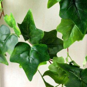зеленый плющ