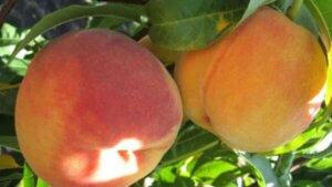два персики