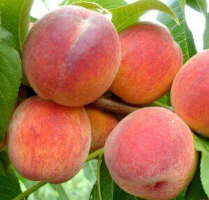 персики спелые